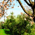 Olivi 3