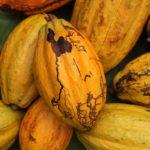 Cacao | Claudio Corallo