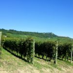 vineyards-458226