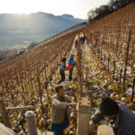 tramin_vineyards01_florianandergassen