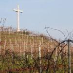 Il colle dedicato a Santa Lucia a Breganze con i vigneti di Firmino Miotti