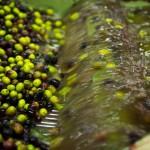 Cooperativa San Felice | Lavaggio olive
