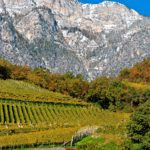 tramin_vineyards04_florianandergassen