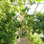 Limonaia a Torri del Benaco