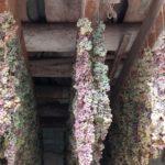 Rosoli di Torcolato - cantina Io Mazzucato