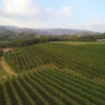 Vigneto sulle colline di Breganze Azienda Vitacchio Emilio