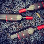 uva e bottiglie vino