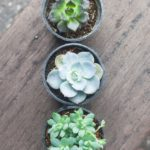 Varity of small cactus in plastic pot plant on wood table