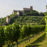 Cantina di Soave_vineyard
